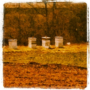 Bee Hives for Hoey