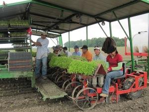 Huffman and Hawbaker planting